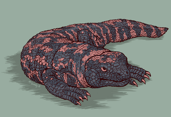 Animal Alphabet G is for Gila monster!